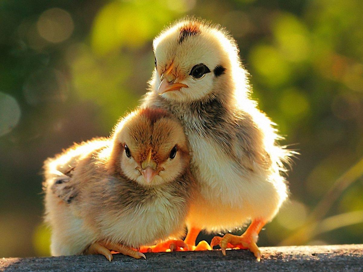 Красивые картинки животные смешные, гифки сердечек открытки
