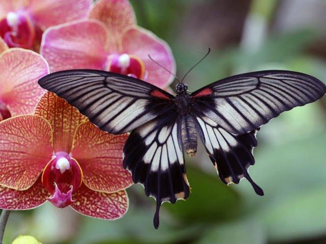 Открытка «Бабочка на цветке» » Сделай сам 12