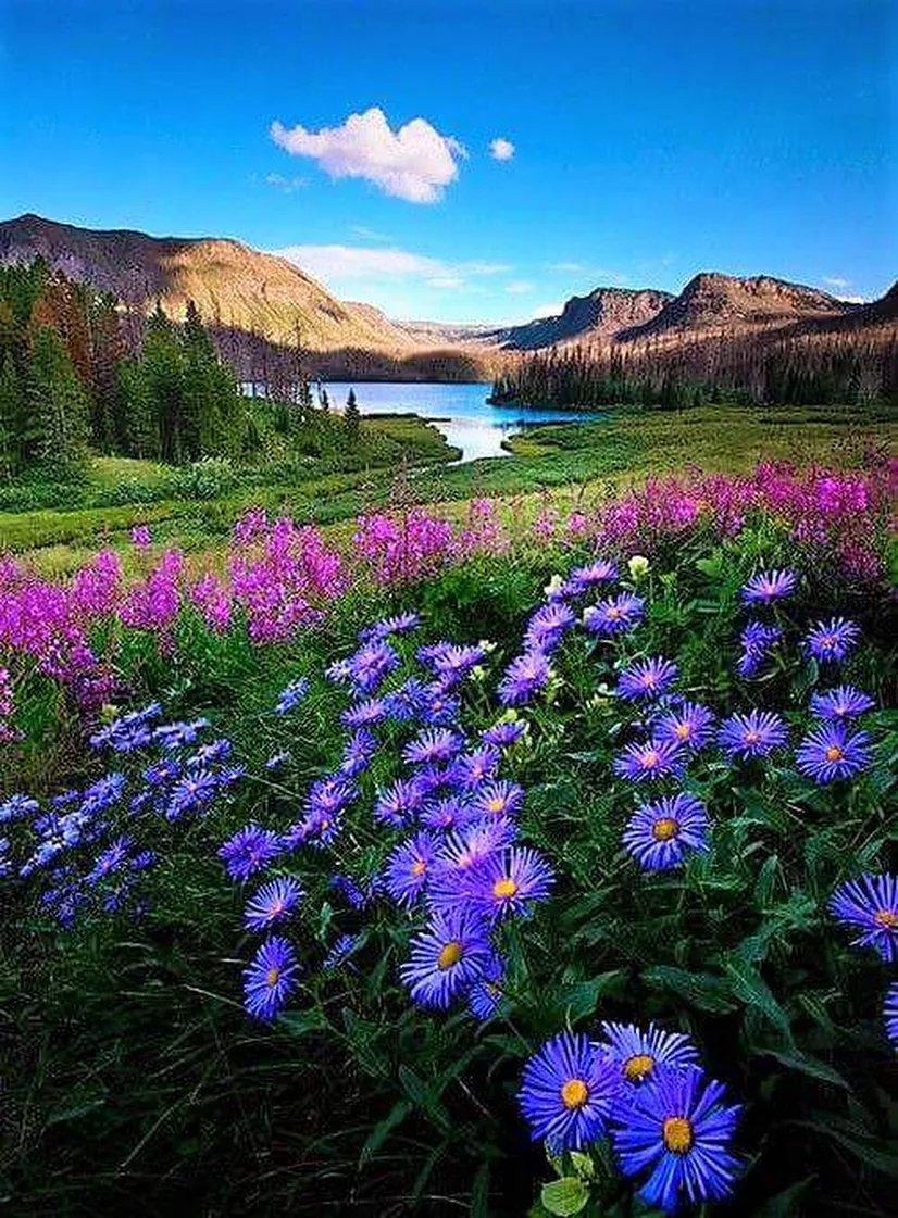 чайка заявил, картинки на телефон красивые цветы и природа отношения паре