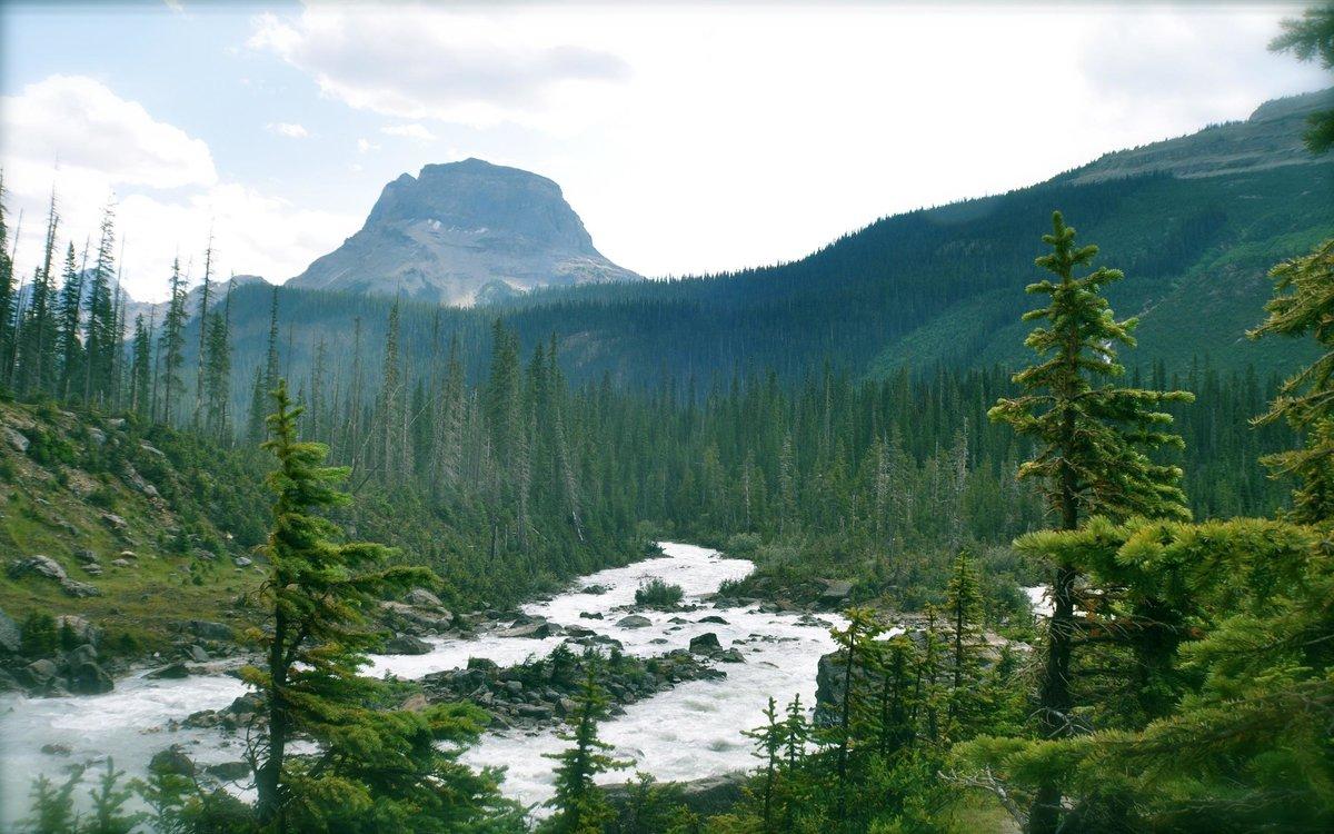Картинки лесов канады