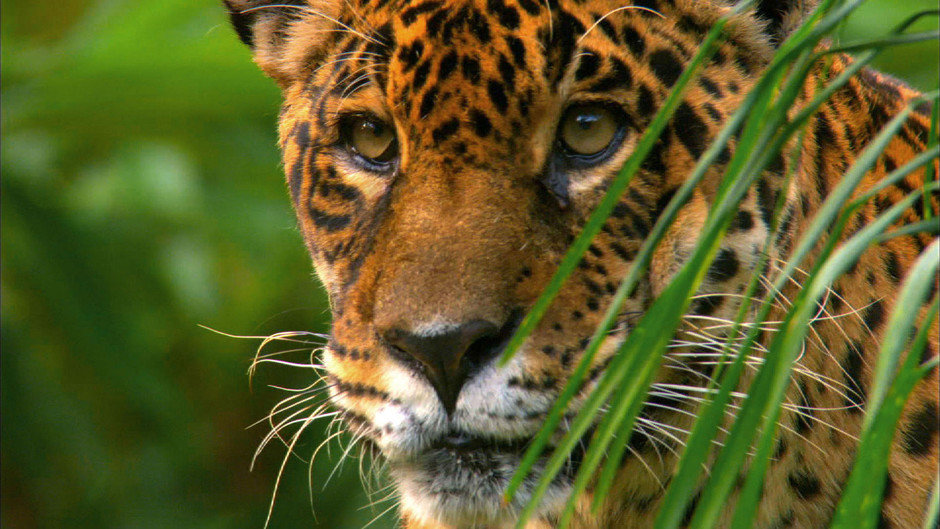 так, что смотреть картинки всех животных амазонки это место