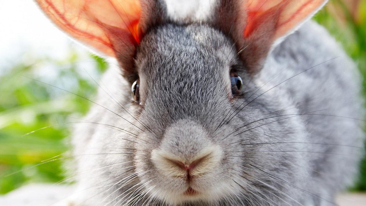 Открытки, кролик картинки прикольные