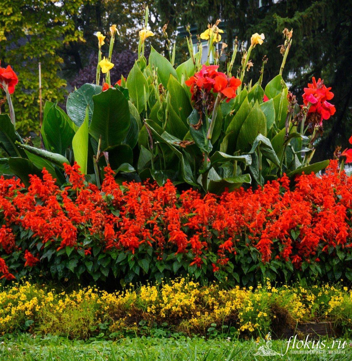 цветы на клумбе цветущие фото печатаем собственных тканях