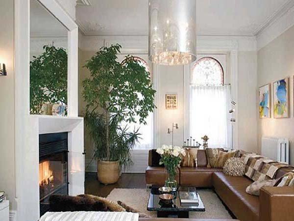 Комнатные растения и цветы в интерьере квартиры: красивое