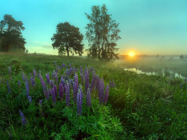 Туман на лугу   на рассвете