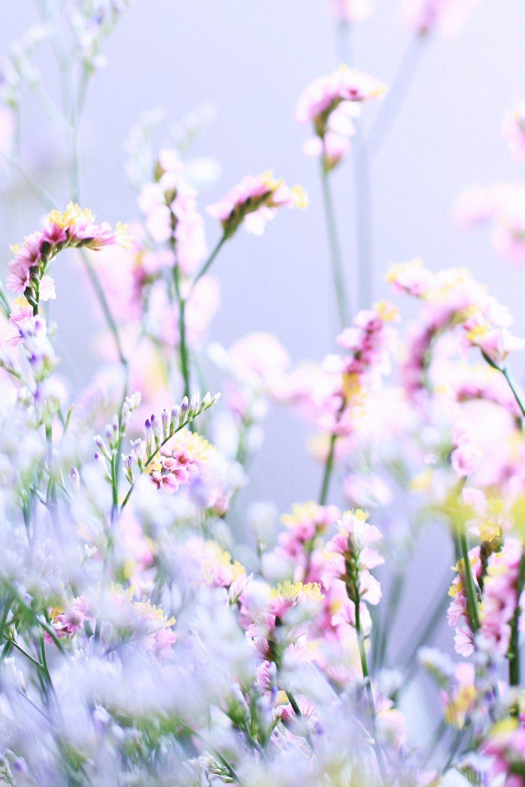 Картинки цветы нежные вертикальные, для открыток днем