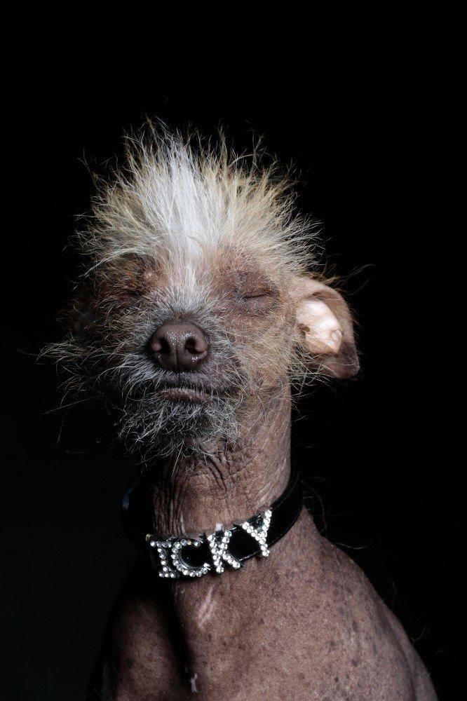 Фотограф Ramin Rahimian. Добрые портреты самых страшных собак в мире.