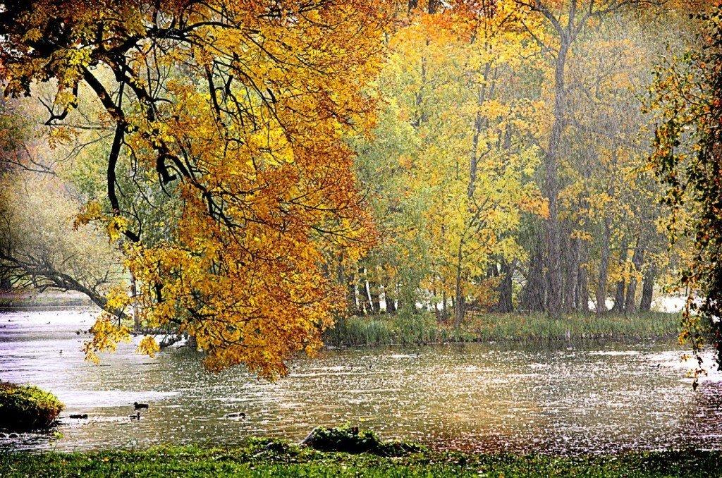 Дождливая осень картинки фото