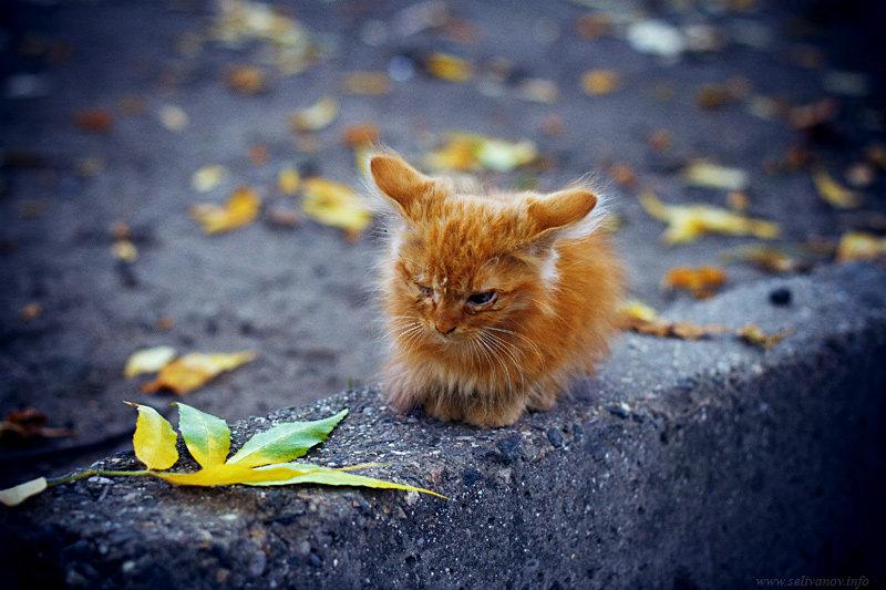 Левитан осень в картинках для ваше