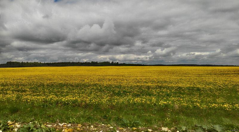 Русское поле. Одуваны подсвечивают облака в пасмурную погоду Русское поле. Одуваны подсвечивают облака в пасмурную погоду Фотографировал  на Lenovo k920. Оригинал по