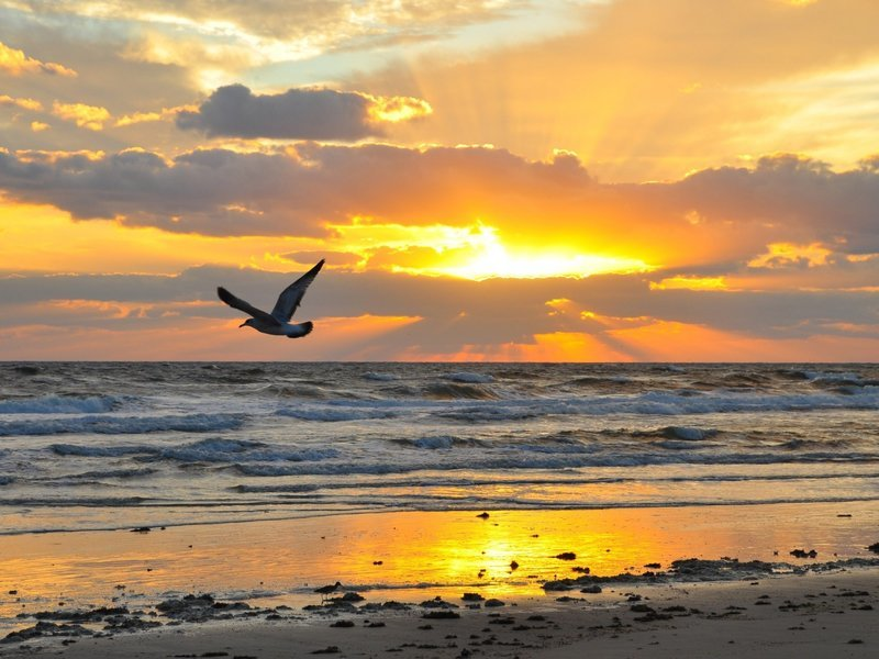 Одинокая чайка над морем на рассвете.