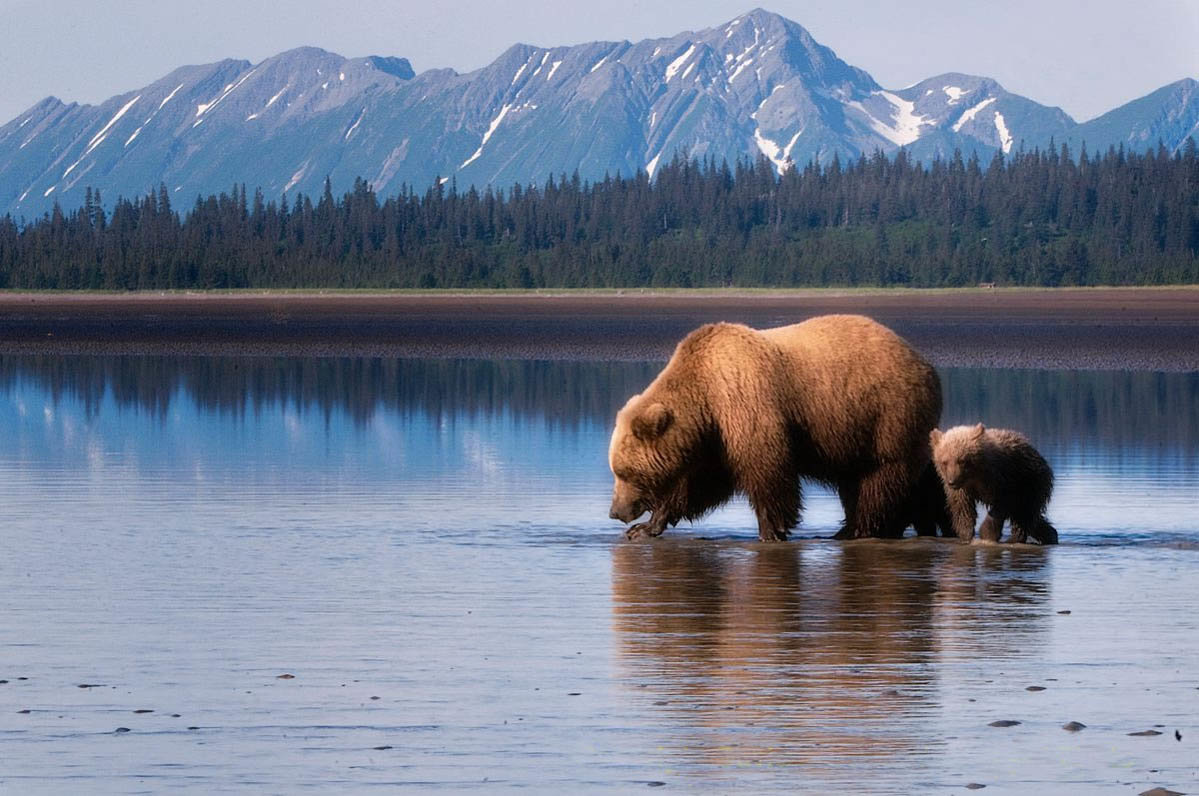 природа америки картинки животных было пустить