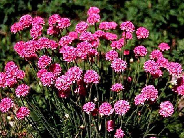 Как и какие цветы посадить на даче чтобы цвели все лето фото