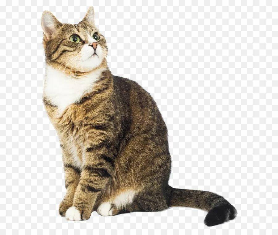 советское фото кота на прозрачном фоне разогревали