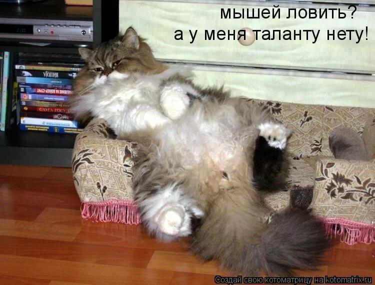 Картинки с приколами про кошек и мышей
