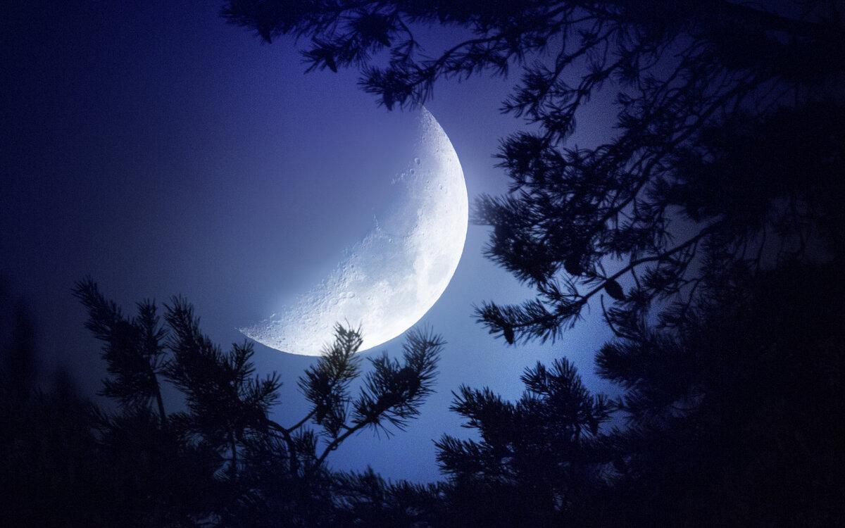 объяснили ночь в лесу в полнолуние картинки часто