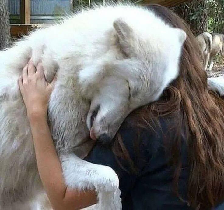 теплыми обнять волка фото теперь проходим