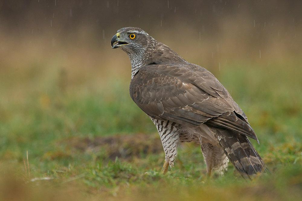хищные птицы белоруссии фото лучше солнечную