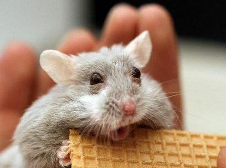 Идут открытки, картинки с мышами прикольные с надписями