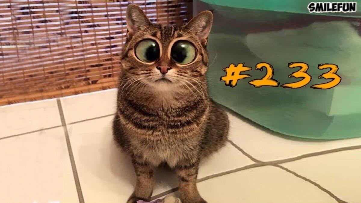 Смотреть смешные котики на ютубе смешно до слез