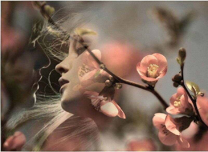 Беларуси аистом, открытка я расцветаю