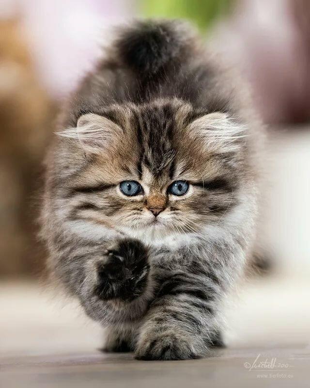 картинки очень красивых пушистых котят