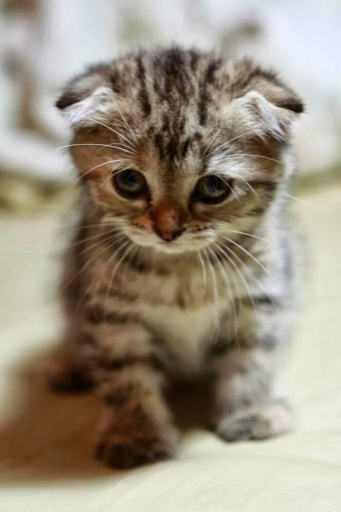 Картинки грустные котята