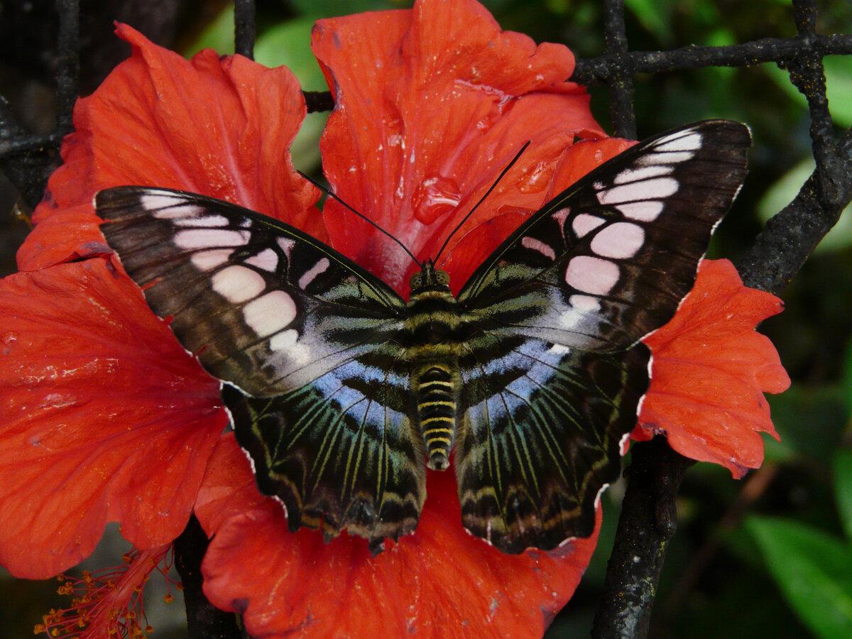 Самые красивые бабочки мира фото подборка
