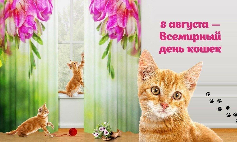 Картинки к дню кошки, анимацией картинки днем