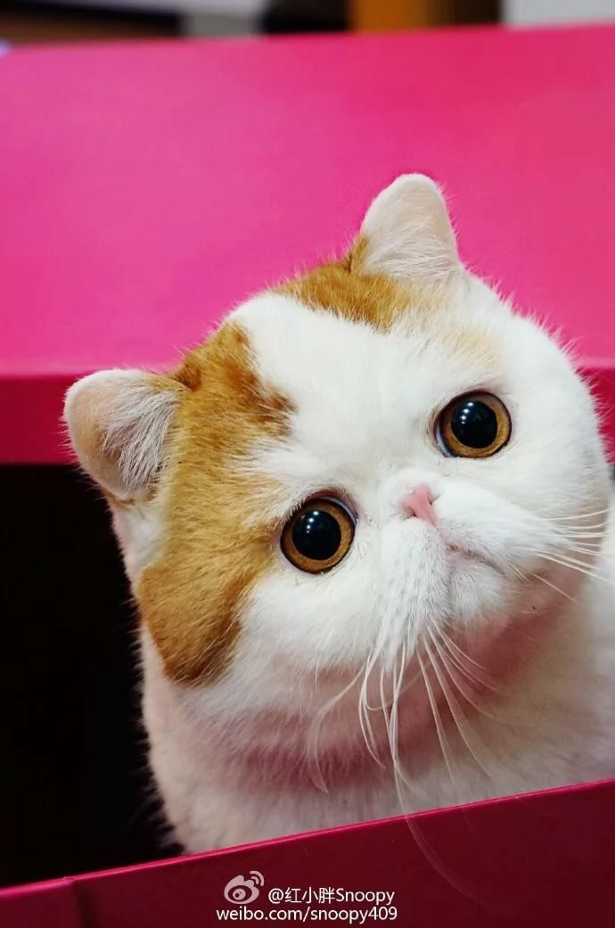 Котята снупи картинки
