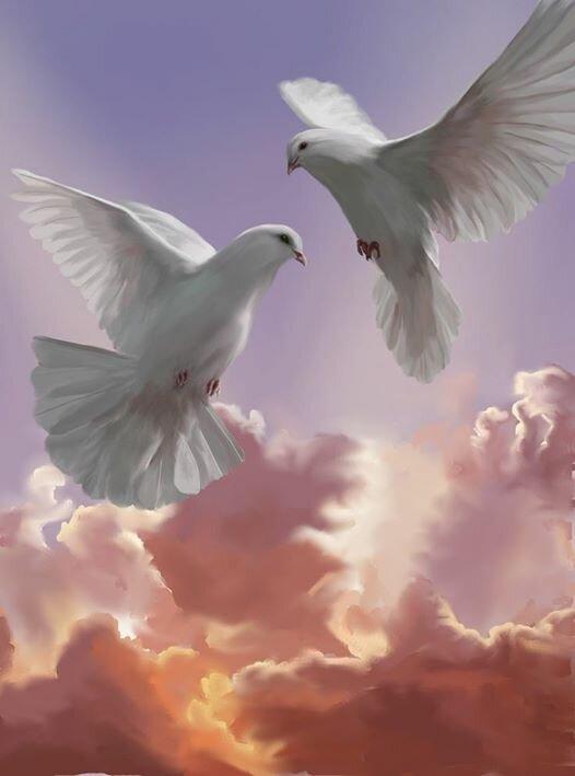 картинки небо с птицами парами него