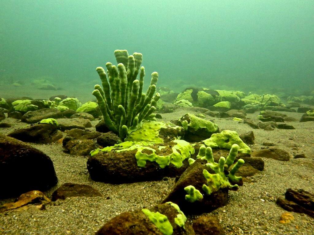 Подводный мир байкала в картинках