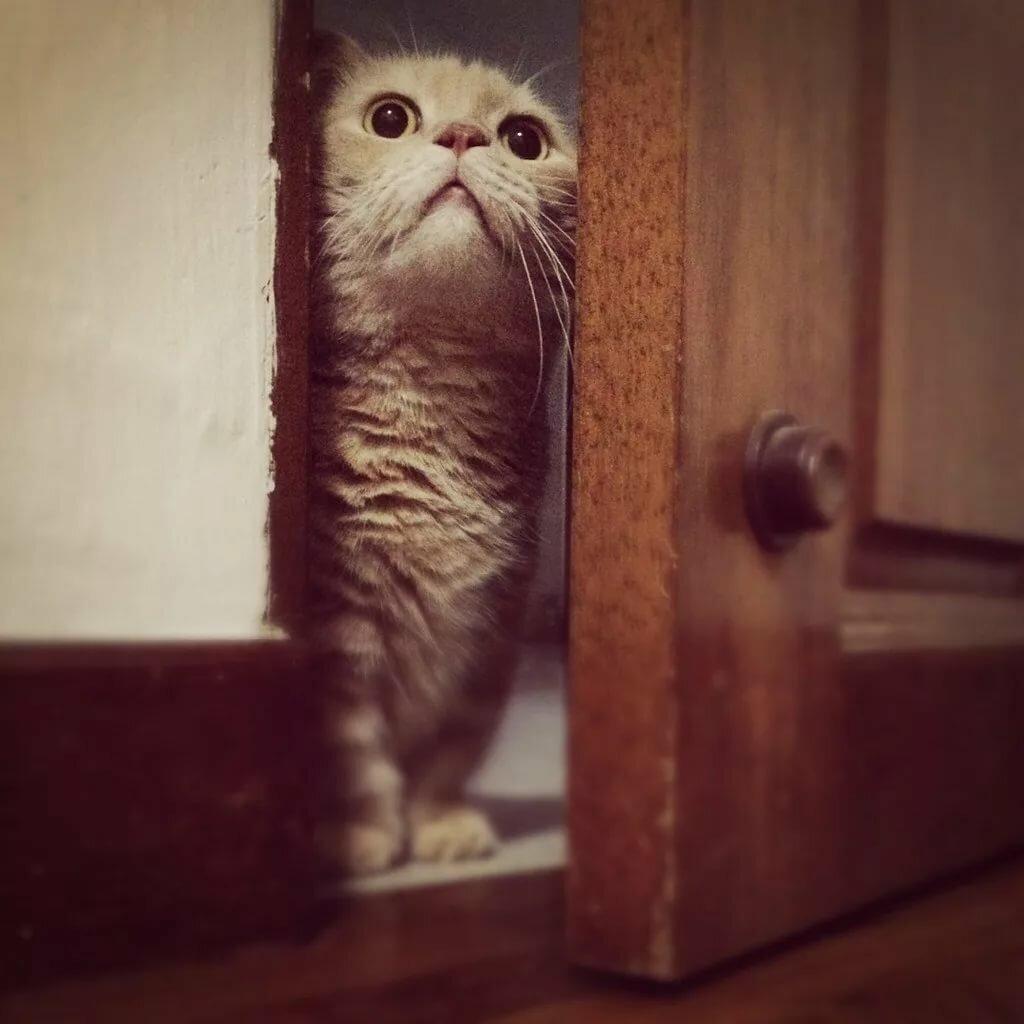 картинки откройте дверь шутка не зашла любые ваши