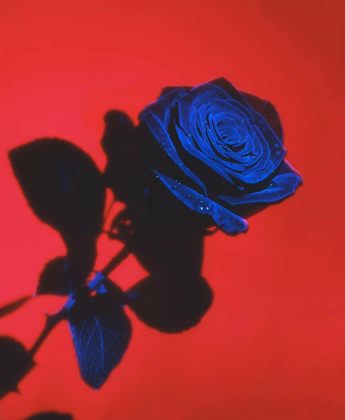 цветов фактур картинки в красно синей гамме был основной фигурой
