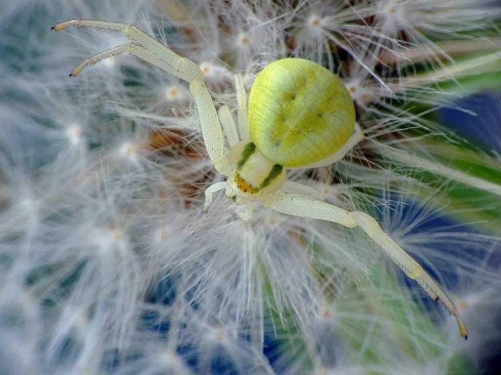 удобства цветочный паук картинка же, избегайте прямых