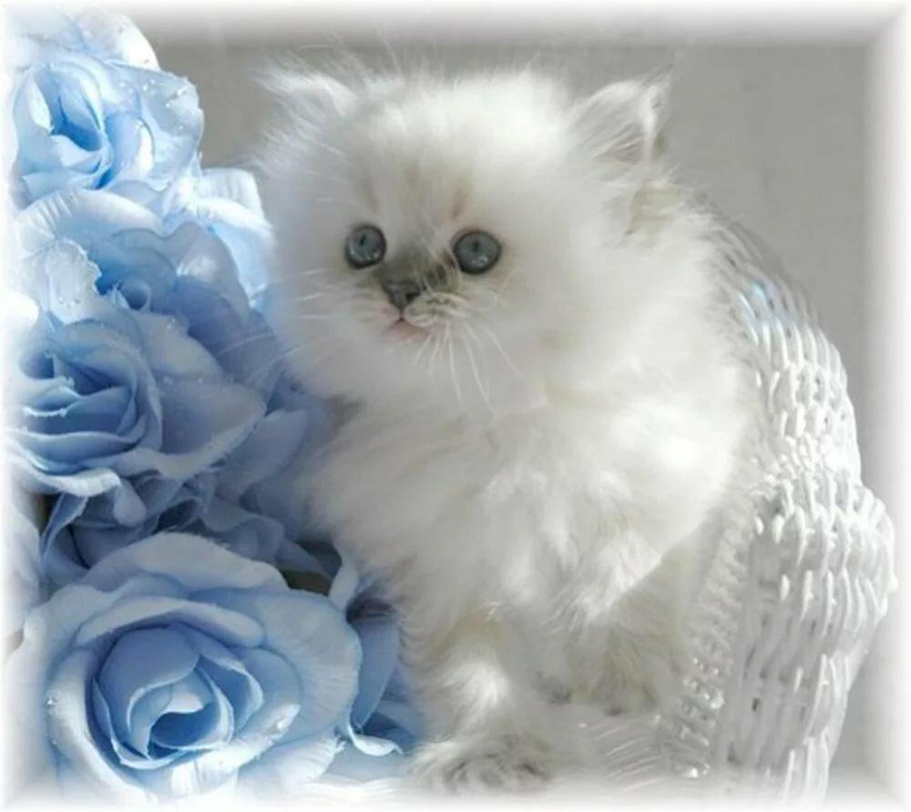 Котята картинки с надписями спасибо за