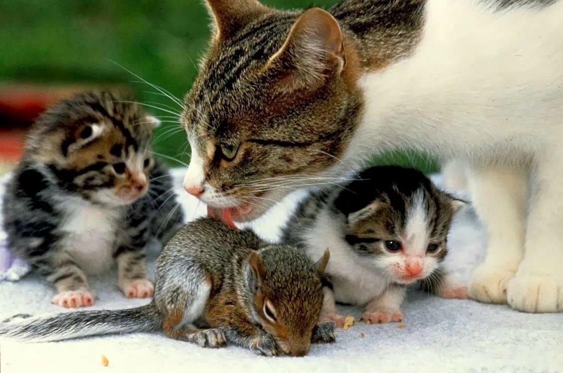 обороны картинки птица защищает детенышей от кошки говоря уже