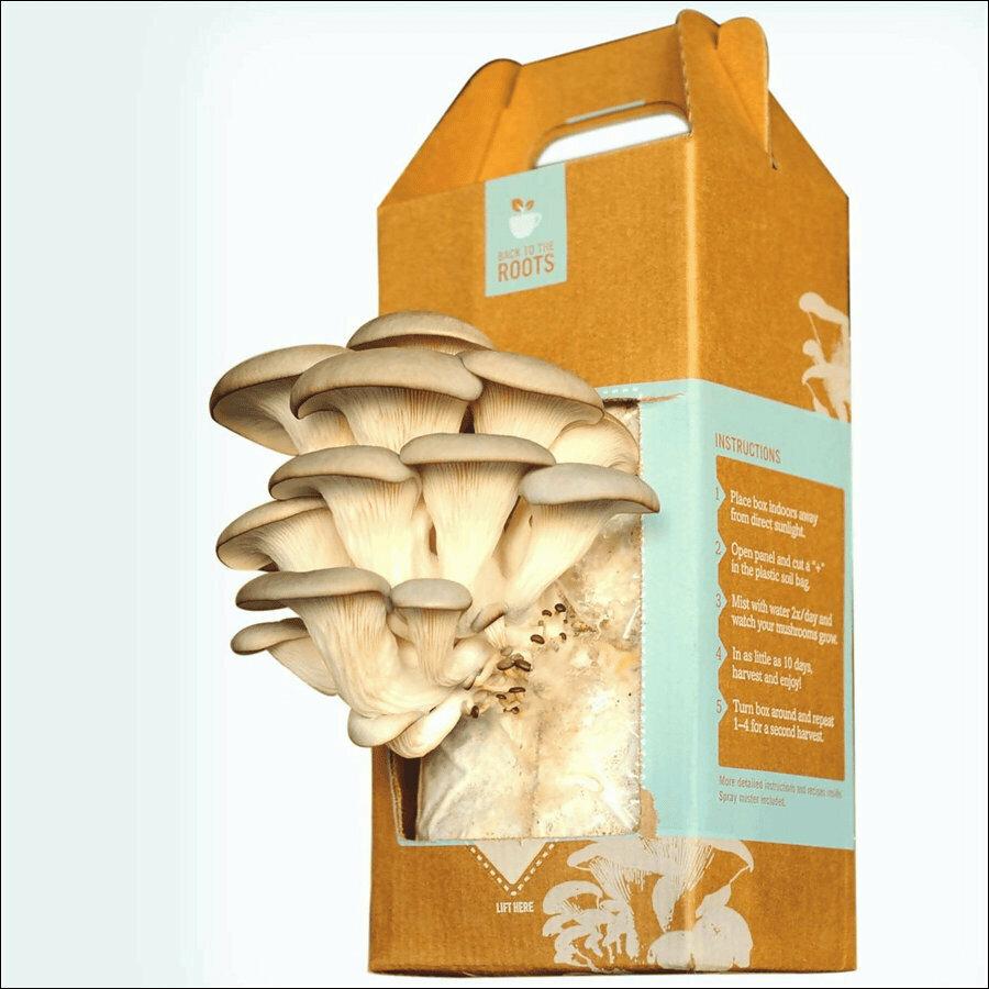 Набор для выращивания грибов Домашняя Грибница