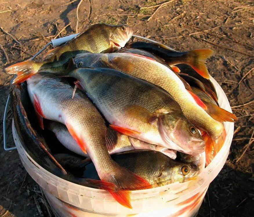 оспитывать фотографии рыбного улова именно