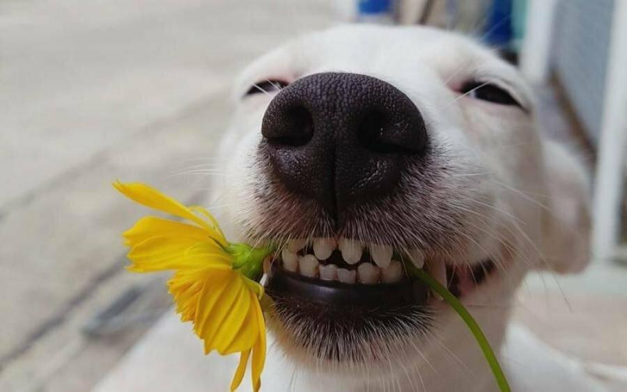 Прикольные картинки улыбки собак