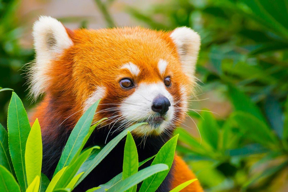 Оранжевые животные картинки и названия