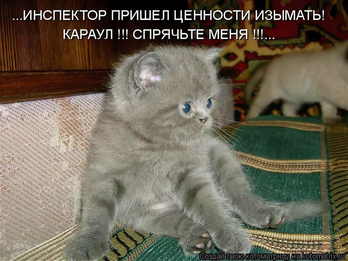 Все картинки котов с прикольными надписями