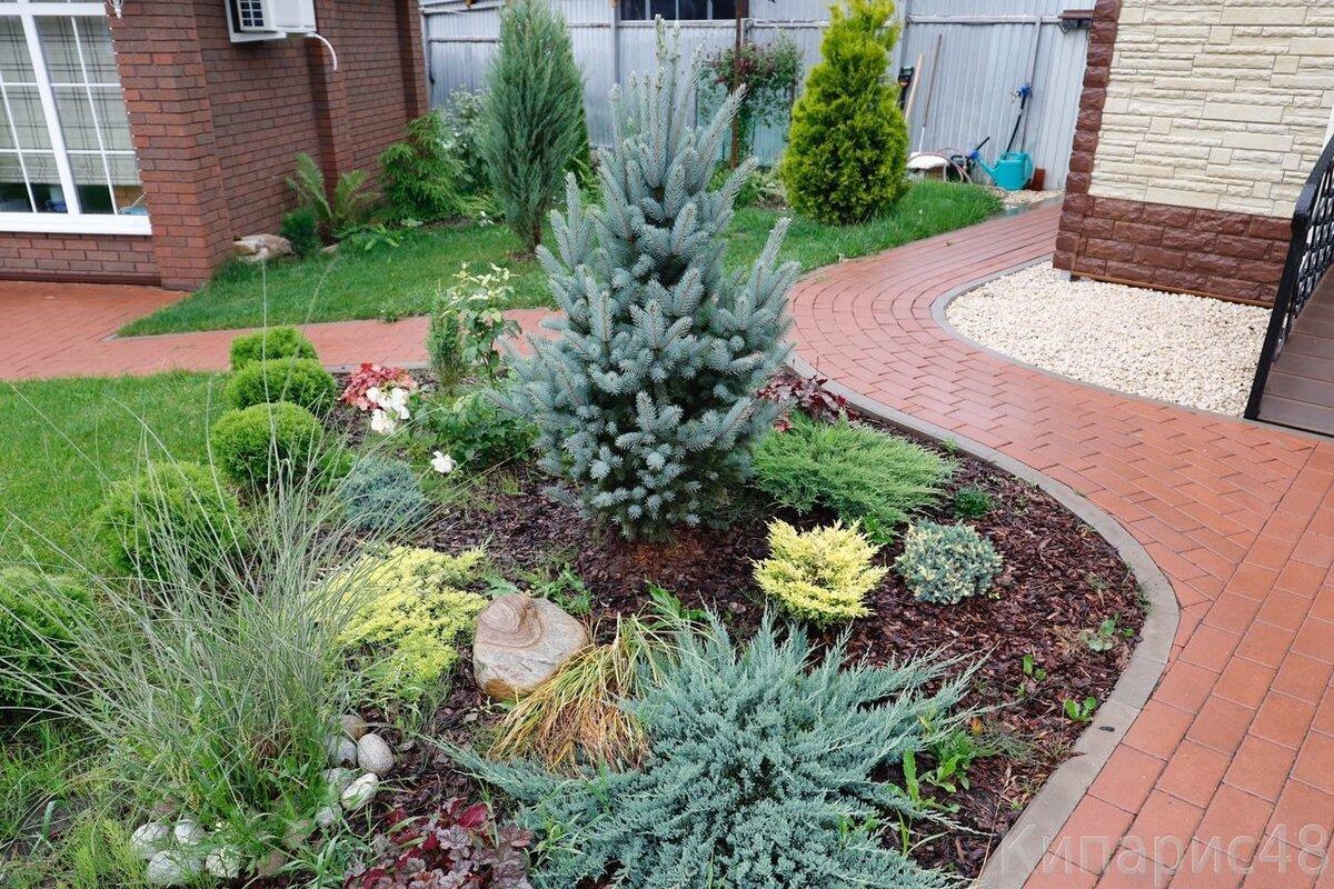 много как красиво посадить елки фото показана любовь очень
