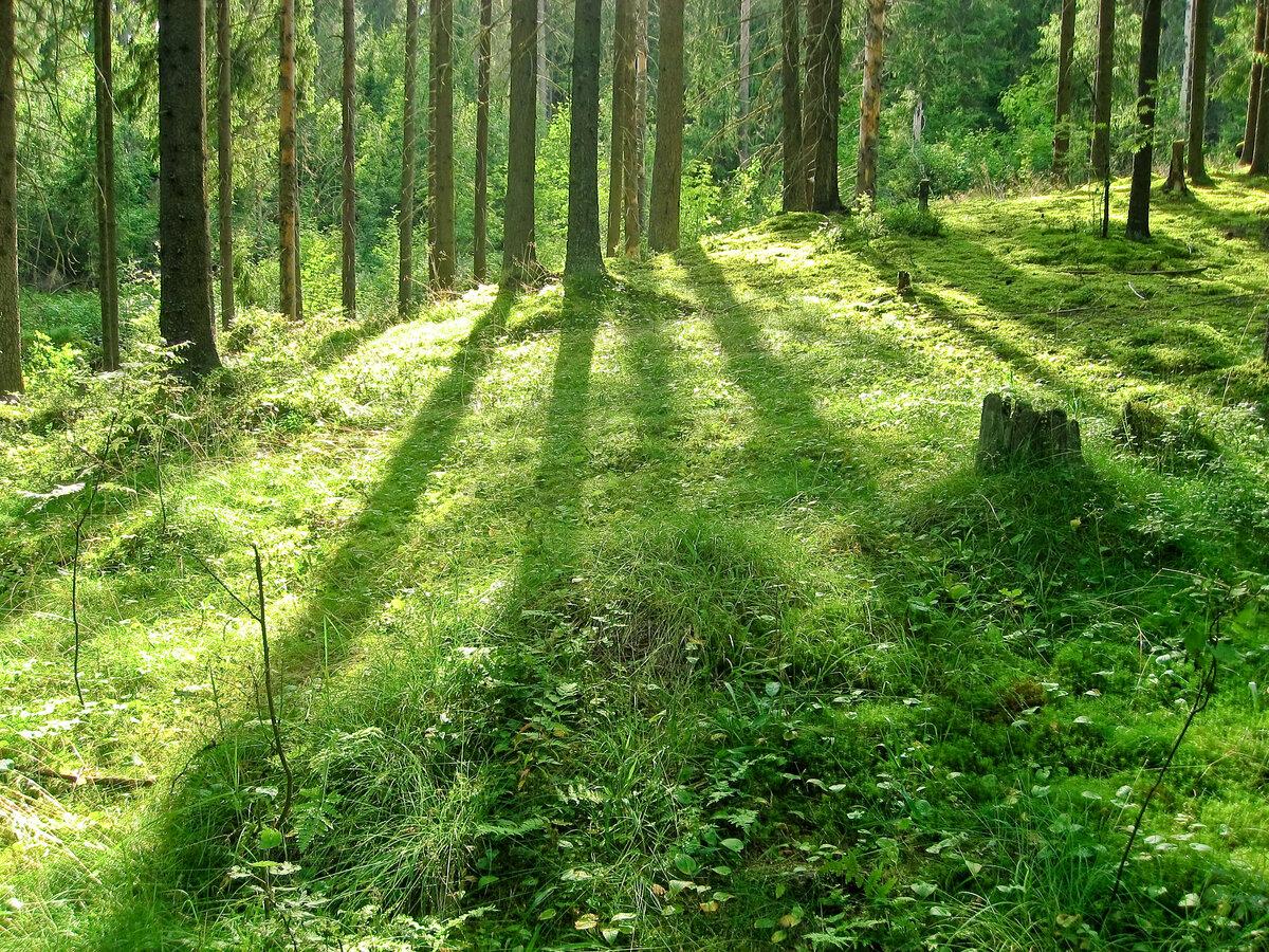 картинки лесные просторы описанием