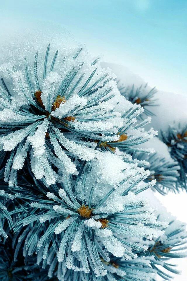Картинка на смартфон экранная заставка зима