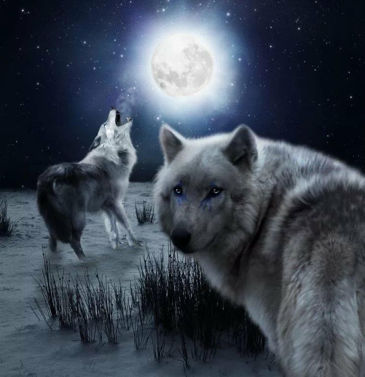 Волк луна зима картинки