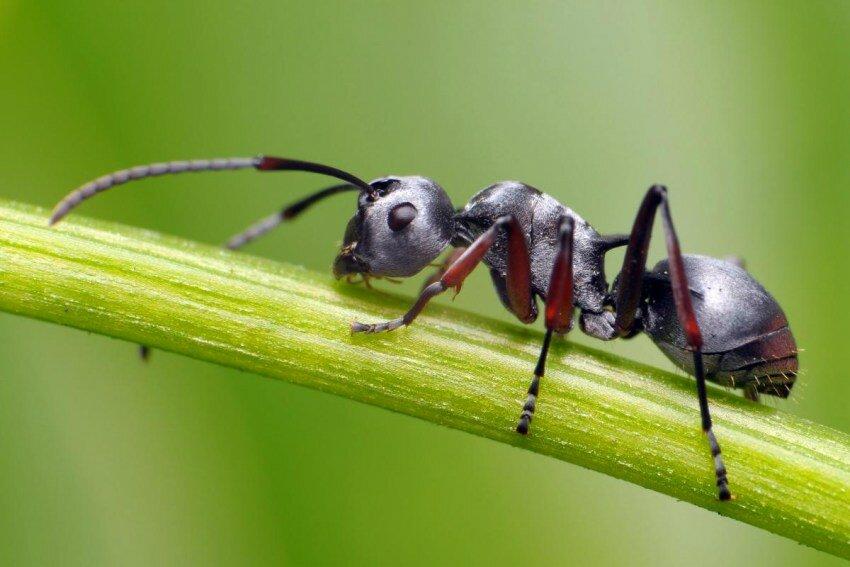предлагается оценить картинка мурашка фото отличия заключаются