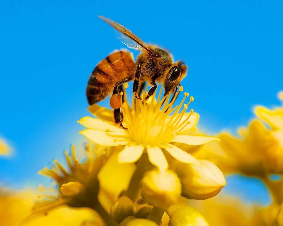 картинка яркая пчелы как мудра
