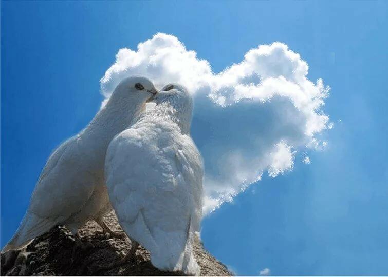 картинки с голубями красивые золото самой высшей