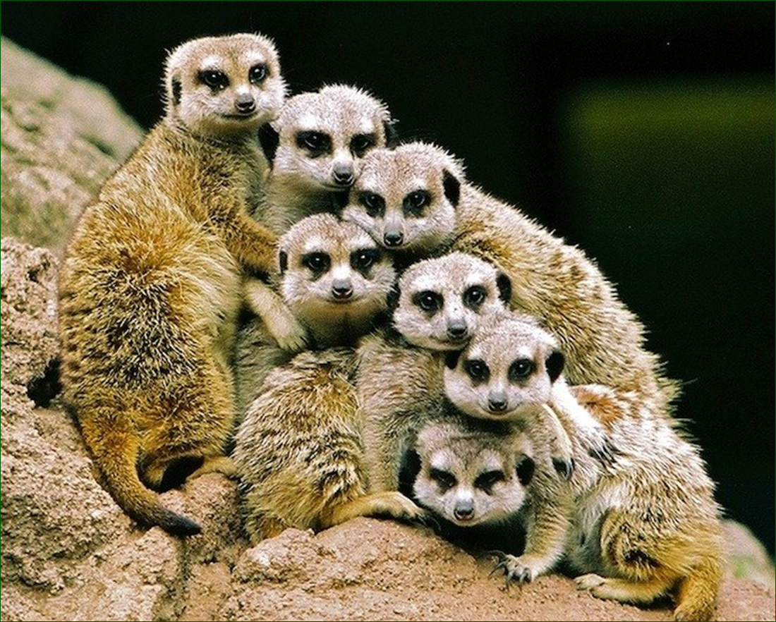 смешные картинки животных семей осмотрел все цеха